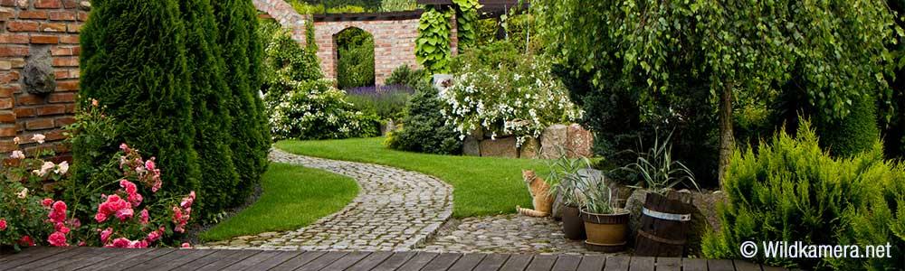 Terrasse Und Garten Mit Wildkamera Im Blick