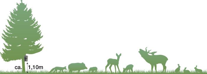 Wildkamera-optimale-Positionierung-fuer-Tieraufnahmen