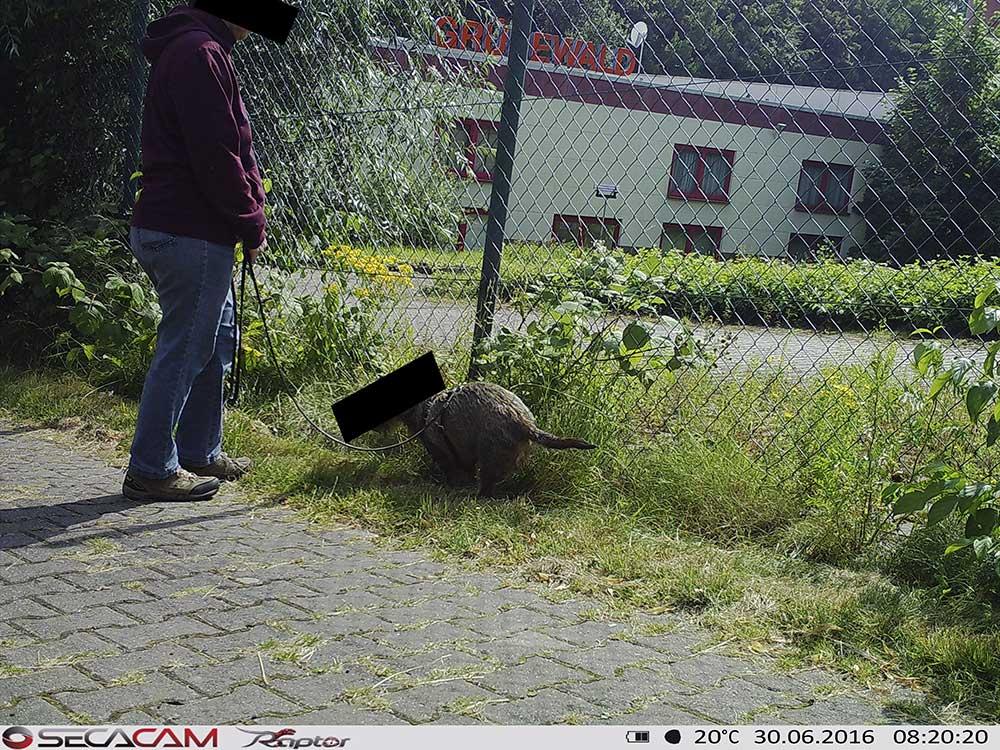 Wildkamera Im Einsatz Gegen Kot Im Garten